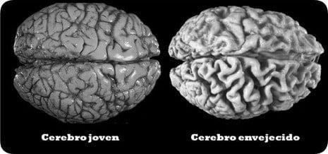 El ejercicio físico puede retardar el envejecimiento cerebral, afirman científicos argentinos