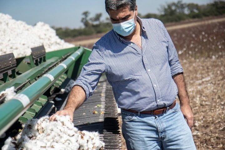 Capitanich espera que esta temporada el Chaco produzca unas cinco millones de toneladas de algodón