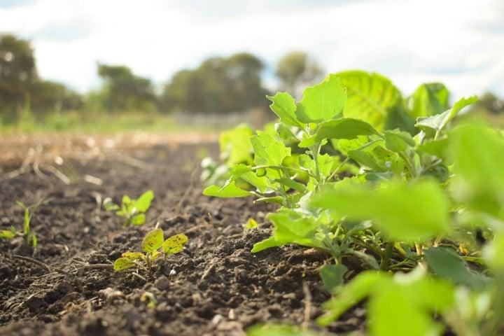 El Gobierno destinará 45 millones de pesos para financiar a pequeños productores hortícolas