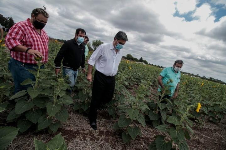 Napenay: el gobernador entregó certificados de cobertura multirriesgos para el cultivo de girasol