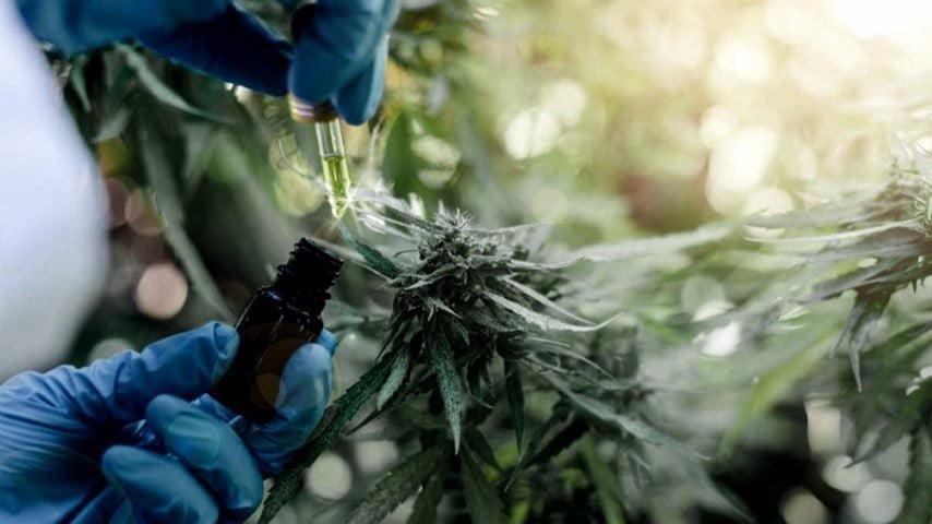 """Con la nueva reglamentación """"hay espacio para una agenda de desarrollo económico en torno al cannabis"""", celebró la Argencann"""