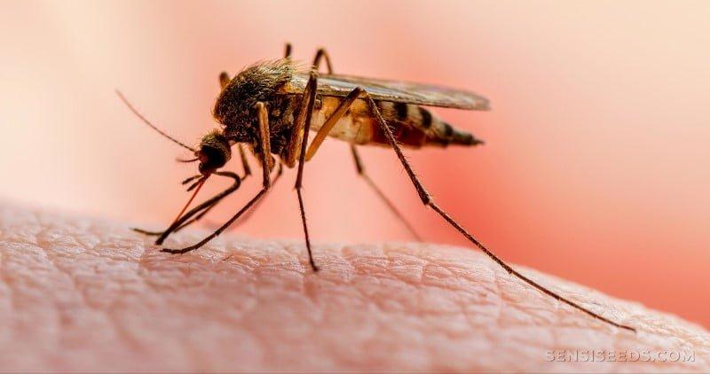 La OMS advierte que los avances en la lucha contra la malaria se estancaron